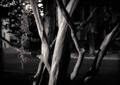 Savannah_Tree