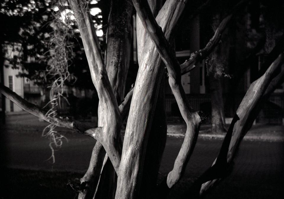 Savannah_Tree